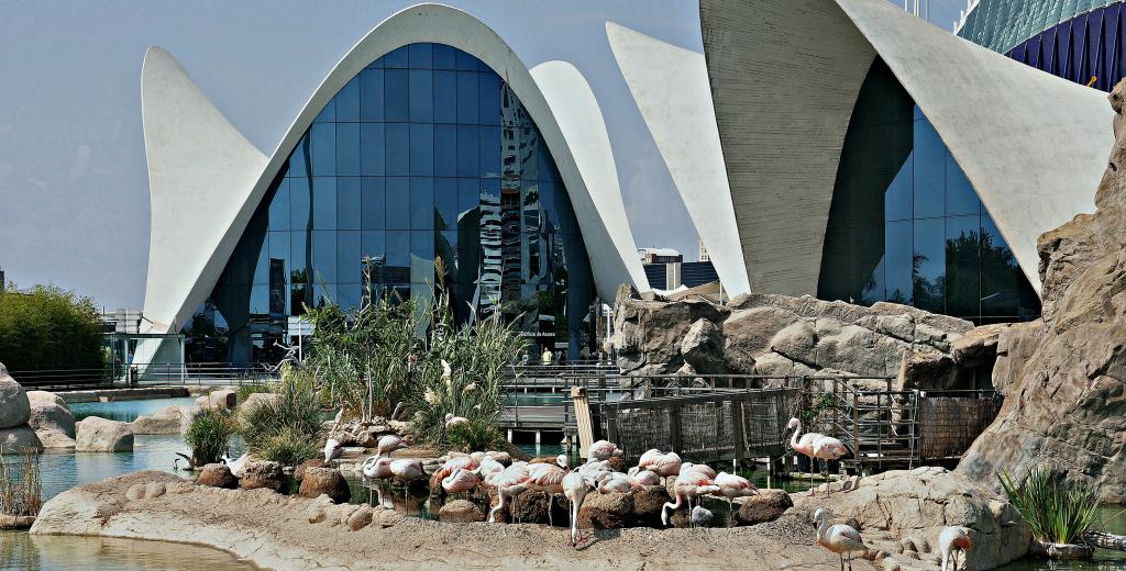 Oceanogràfic : Visitez le plus grand aquarium d'Europe