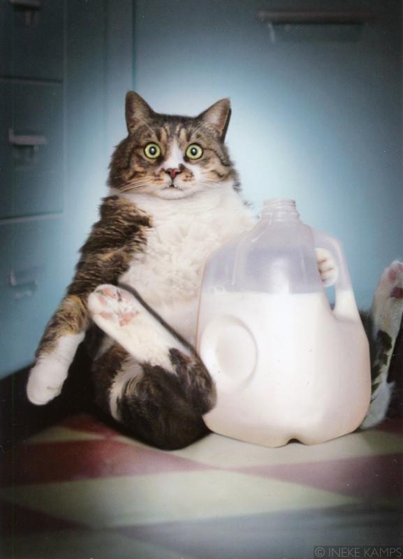 Expression n°1 : Es la leche !