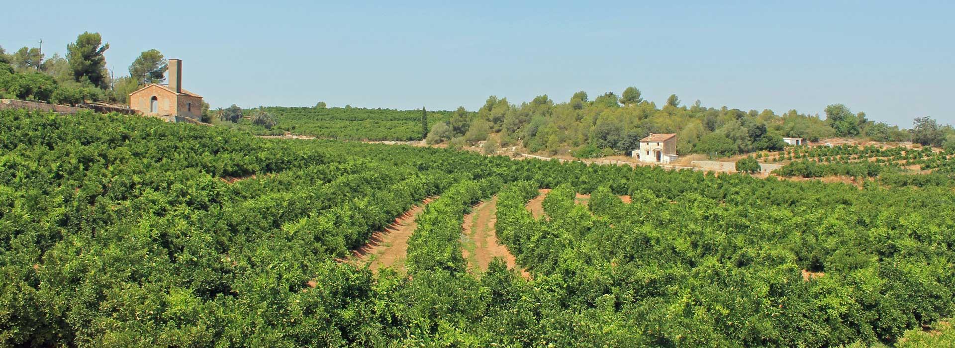 Découvrir la route de l'orange à Valence